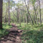森林浴で頭皮のストレス退治